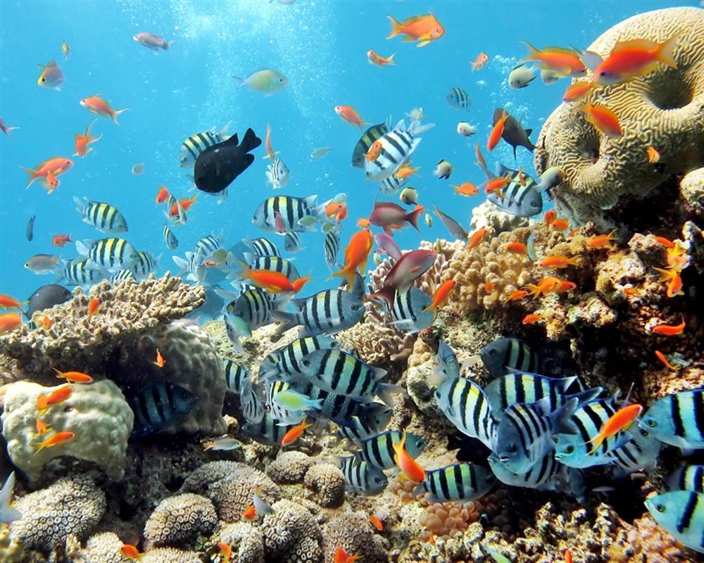 Exploreaza lumea subacvatica