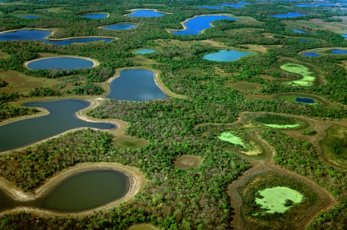 Pantanalul