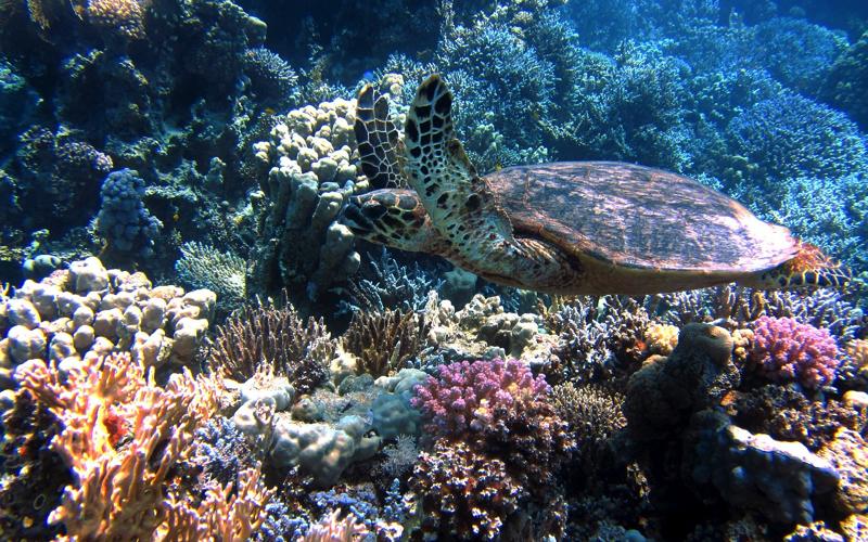 Faceti snorkeling sau scufundari